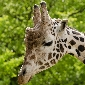 gorewada zoo nagpur