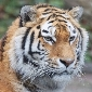 tourism nagpur and tiger capital of india rishi saraf canary