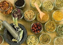 traditional forest remedies