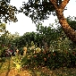 green city nagpur